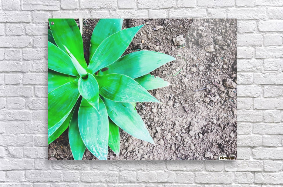 green leaf plant with sand background  Acrylic Print