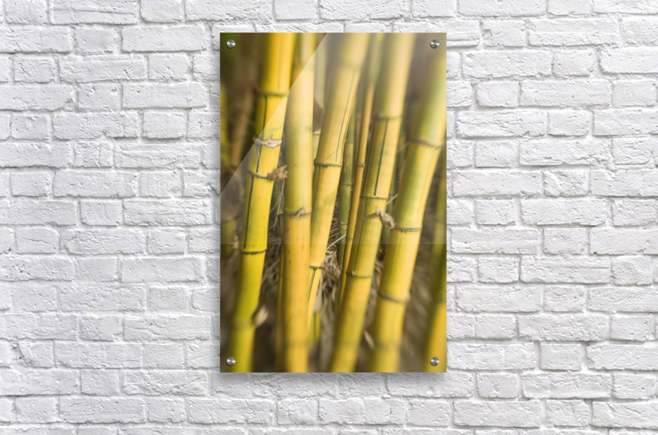 Close-Up Of Bamboo Stalks.  Acrylic Print