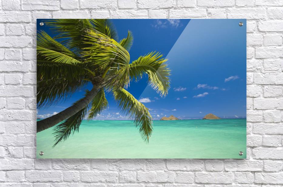 USA, Hawaii, Oahu, Mokulua island in background; Lanikai, Palm tree over Pacific Ocean  Acrylic Print