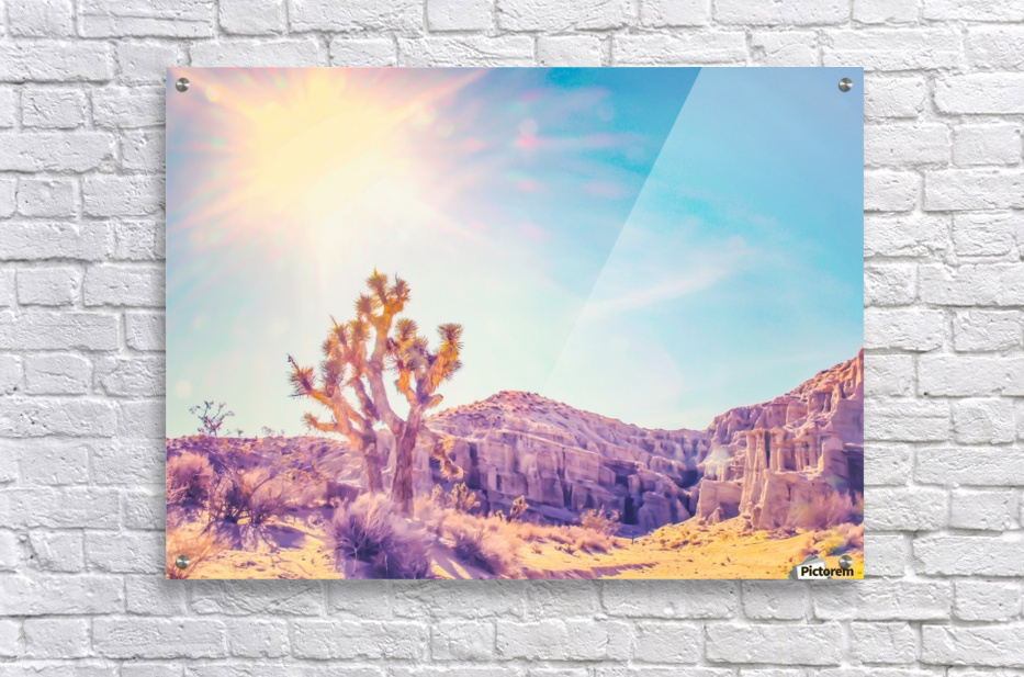 cactus at the desert in summer with strong sunlight  Acrylic Print
