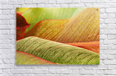 Indonesia, Bali, Close-Up Of Tropical Plants, Leaves  Acrylic Print
