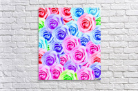 closeup colorful rose texture background in pink purple blue green  Acrylic Print