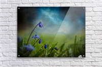 After the spring rain  Acrylic Print