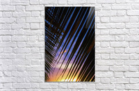 Close-up of silhouetted palm fronds with beautiful sunset color sky in the background; Honolulu, Oahu, Hawaii, United States of America  Acrylic Print