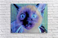 electric kitty  Acrylic Print