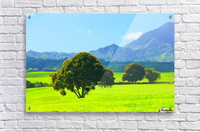 green tree in the green field with green mountain and blue sky background  Acrylic Print