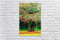 big tree with green yellow and red leaves  Acrylic Print