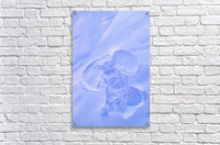 Close Up Of Snow Angel At Sunset With Blue And Pink Highlights Winter Fairbanks Interior Alaska  Acrylic Print
