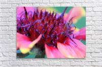 Sun Flower Macro  Acrylic Print