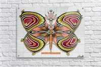 butterfly from the twenties  Acrylic Print