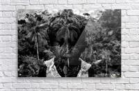 Guyana Child of the jungle   Acrylic Print