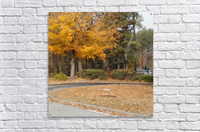 Georgia Fall  Acrylic Print