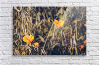 yellow poppy flowers with green leaves texture background  Acrylic Print