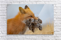 Supper on the Way  Acrylic Print
