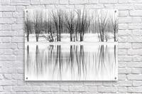Reflexion  Acrylic Print