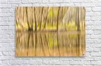 forest park reflections  Acrylic Print