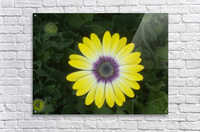 DSCN0662  Acrylic Print