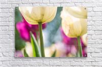 Under The Tulips - Sous Les Tulipes  Acrylic Print