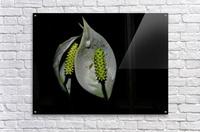 F (1)  Impression acrylique