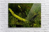 H (7)  Acrylic Print