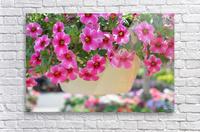 Beautiful Pink Flowers Photograph  Acrylic Print