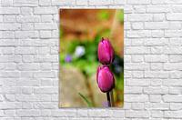 Simple Beauty  Acrylic Print