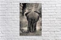 Straight Ahead - Droit Devant  Acrylic Print
