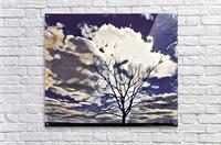 regal tree  Acrylic Print