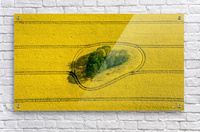 Island in the Field  Acrylic Print