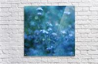 Blue Serenity  Acrylic Print