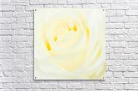 The White Rose  Acrylic Print