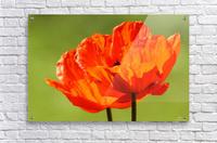 Kiss The Sun  Acrylic Print