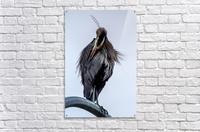 Haute couture  Acrylic Print