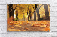 Beautiful Nature Landscape Tree Forest Trees Photography landscape photo Scenery  Acrylic Print