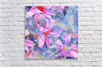 blooming pink and blue daisy flower abstract background  Acrylic Print