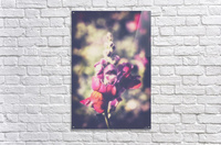 Lupine Fuchsia  Acrylic Print