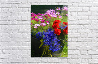 Alaskan Bouquet  Acrylic Print