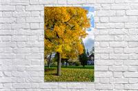 Autumn  Acrylic Print