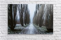 Symetric walk path in fog  Acrylic Print