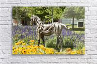 Odyssey the horse and Hope the Colt sculptures made of driftwood by Heather Jansch. 2  Acrylic Print