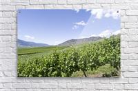 Okanagan Valley winery  Acrylic Print
