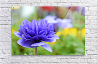 Blue Flowers Photograph  Acrylic Print