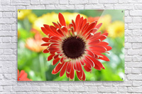 Red Flower Photograph  Acrylic Print