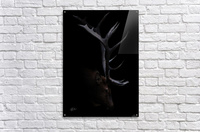 Elk in Black  Impression acrylique