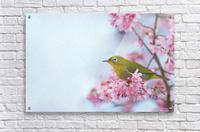 Bird In Sakura Cherry Blossom Tree  Acrylic Print