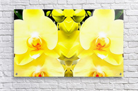 Yellow Orchid Pattern  Acrylic Print