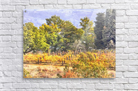 Tuscan Countryside in Autumn  Acrylic Print