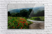 The Poppy Road to Happiness  Acrylic Print