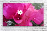 Flowers (95)  Acrylic Print