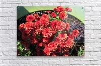 Flower (4)  Acrylic Print